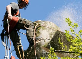 Pembrokeshire Tree Services