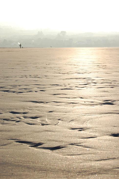 Golden on Newport Sands
