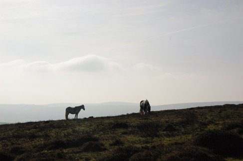 Wild ponies on Dinas Mountain